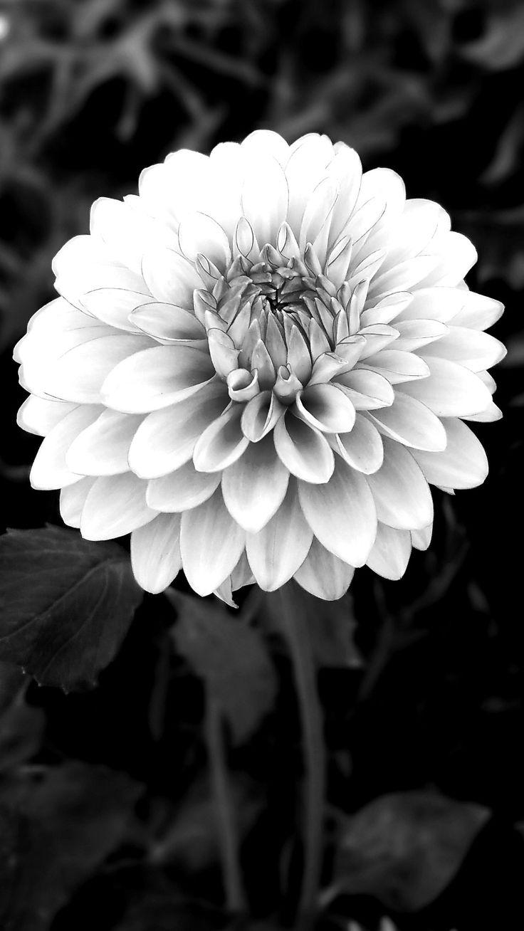 Pin by alia on My photos Plants, Flowers, Garden