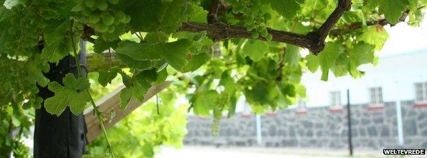 Vines in front of Nelson Mandelas former cell