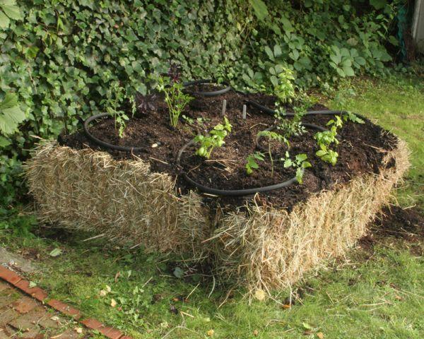 75 best straw bale gardening images on pinterest for Straw bale gardening techniques