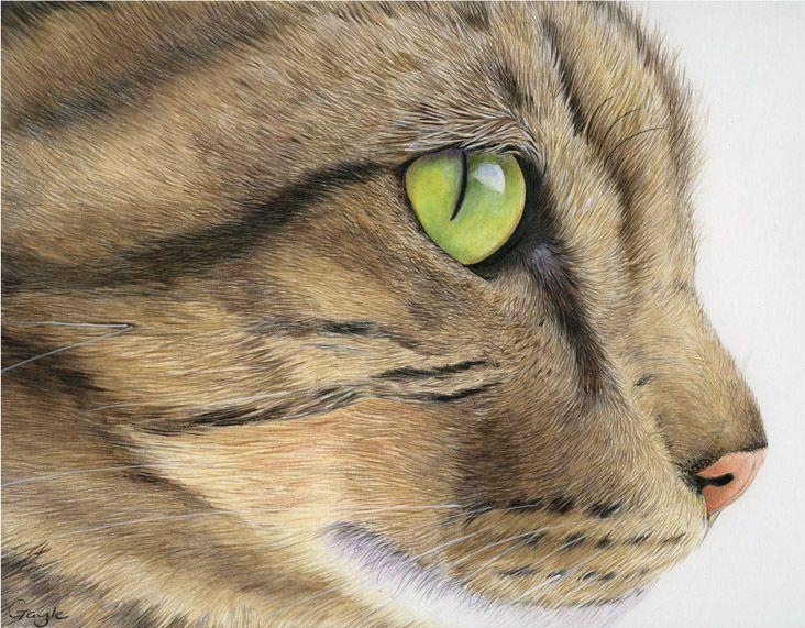 Gayle Mason - английская художница, работающая в основном цветными карандашами, пастелью и акрилом.Гейл-биолог по профессии. Она безумно любит животных и все ее работы…