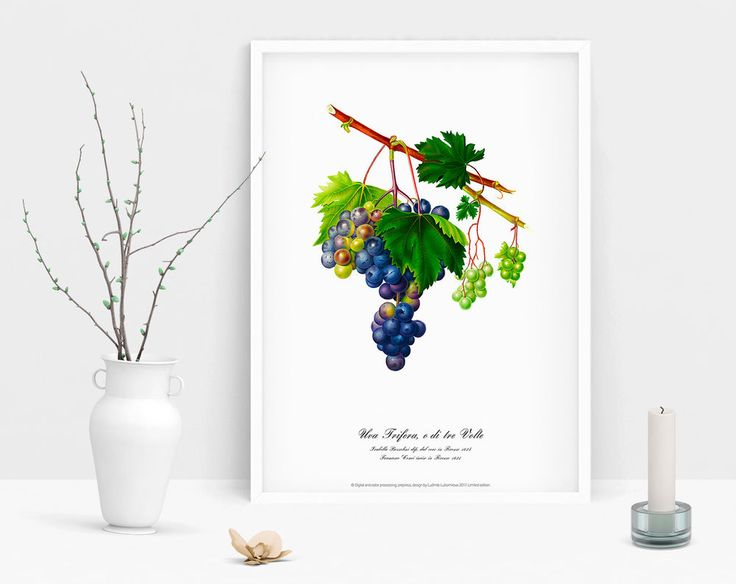Botanical vintage Grape geclee art print poster illustration wall home decor  #Vintage