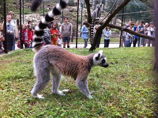 Veszprem Zoo (Kittenberger Kalman Noveny es Vadaspark) - Veszprem, Hungary