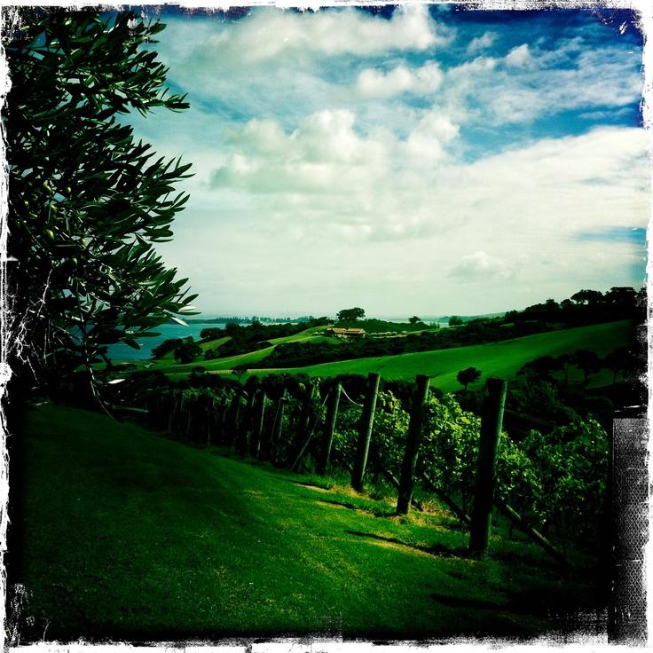 Cable Bay Vineyard on Waiheke Island. Breathtaking on a gorgeous day!