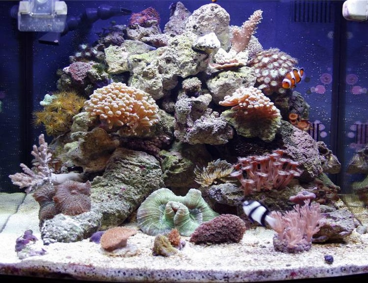 Nano forums shortyz918 biocube 29 mixed softy for Bio cube fish tank