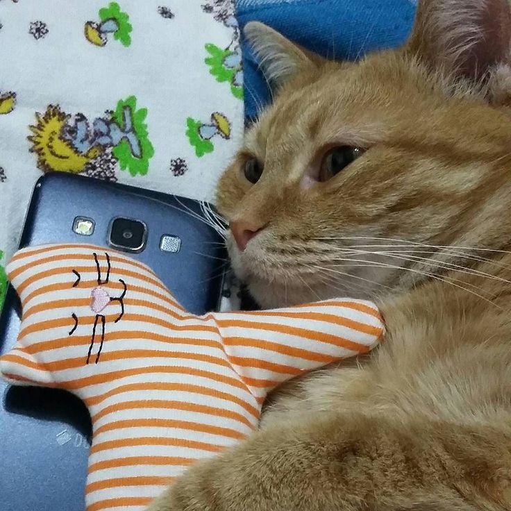 No comment  Follow us on: - https://goo.gl/NKk858 - Twitter: https://goo.gl/PlLXiR - Pinterest:https://goo.gl/9NIzFX - Facebook:https://goo.gl/Y7XnNU  #russianminiatures #cat #meow #instacat #exellent_cats #kitty #bestmeow #catstagram #thorbengal #instagood #ilovemycat #likebackalways #cats #catsofinstagram #kitten #catoftheday #lovecats #petstagram #goodmorning #cats_of_instagram #petsofinstagram #mycat #fluffy #instacats #catsofig #catsrequest