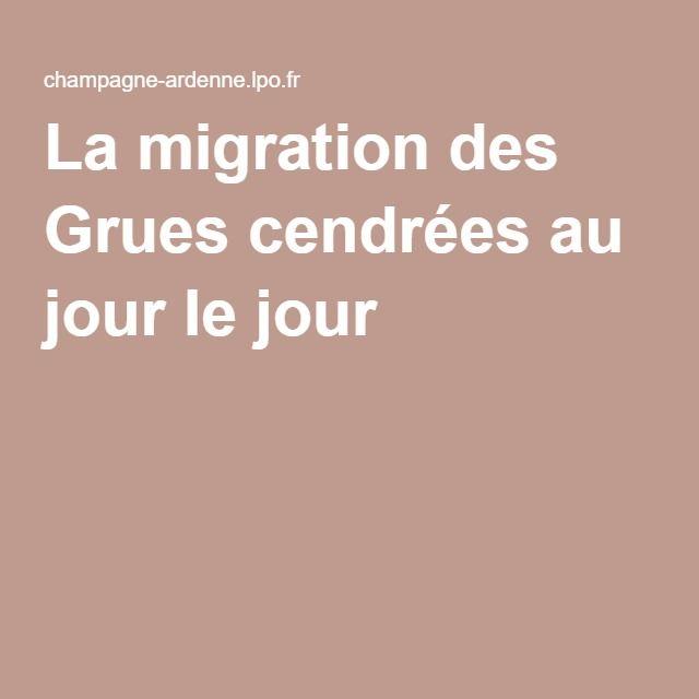 La migration des Grues cendrées au jour le jour