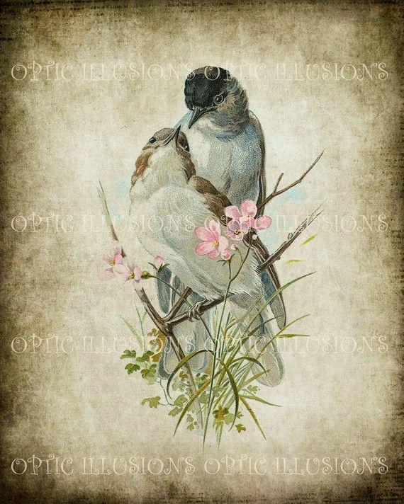Vintage ilustraciones de pájaro en papel antiguo - descargar INSTANT - 10-8 x 10 pulgadas de tamaño - de aves