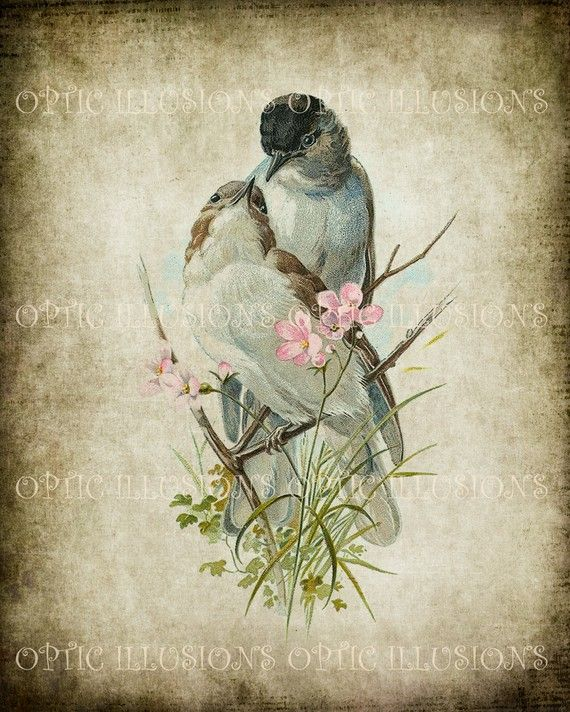 Vintage Bird Abbildungen auf alten Papier von opticillusions