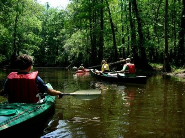 Congaree National Park, South Carolina - old growth forest swamp with kayaking and boardwalks