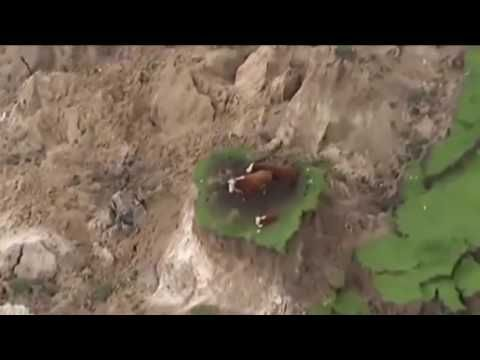 BREAKING NEWS - 7 8M earthquake strikes New Zealand, Cows Stranded on 'I...