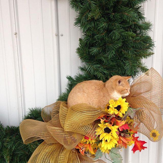 Steve French, the cat, in camouflage. (scheduled via http://www.tailwindapp.com?utm_source=pinterest&utm_medium=twpin&utm_content=post180801639&utm_campaign=scheduler_attribution)