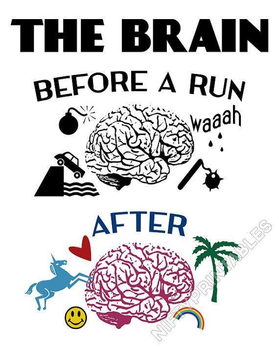 The Brain - Before and After a Run | running tips | writers who run | tips for runners | running advice | synergy | body mind awareness