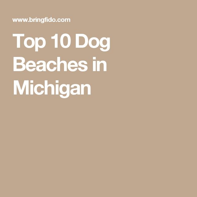 Top 10 Dog Beaches in Michigan