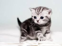 yavru kedi - Google'da Ara