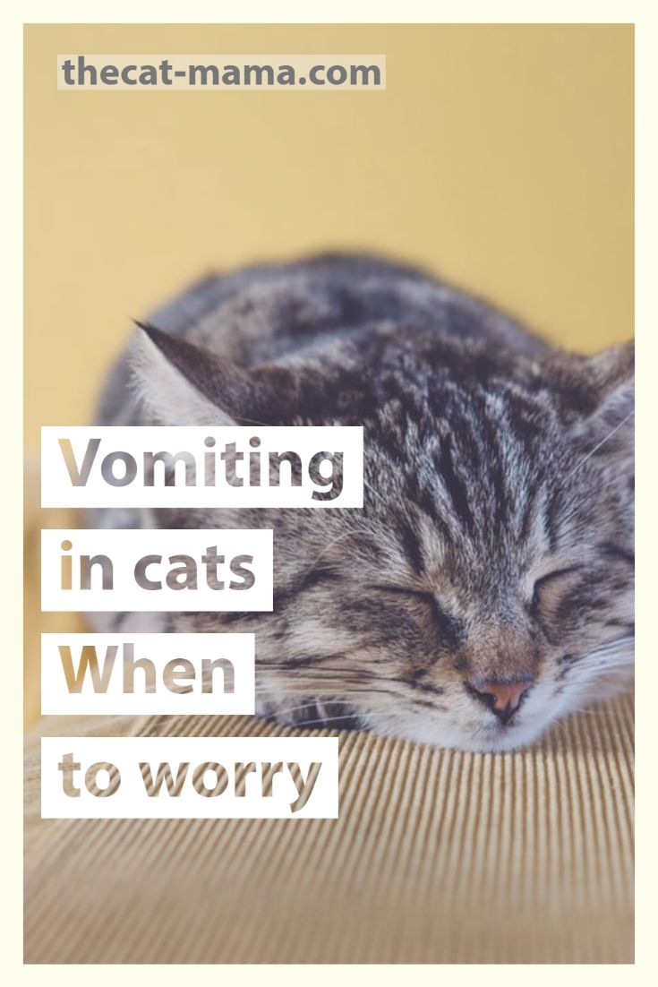 Vomiting In Cats When To Worry Cat Mama Talks Cat Vomiting In 2020 Cats Mama Cat Cat Parenting