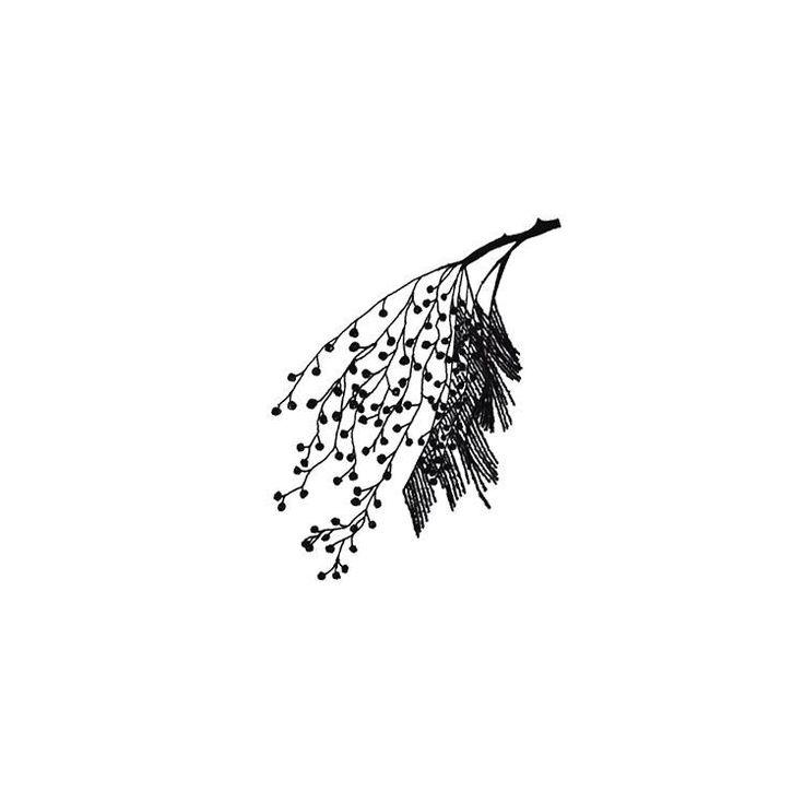 Mimosa branch illustration. #illustration #sketch #fineliner #mimosa #mimosatree #botanical