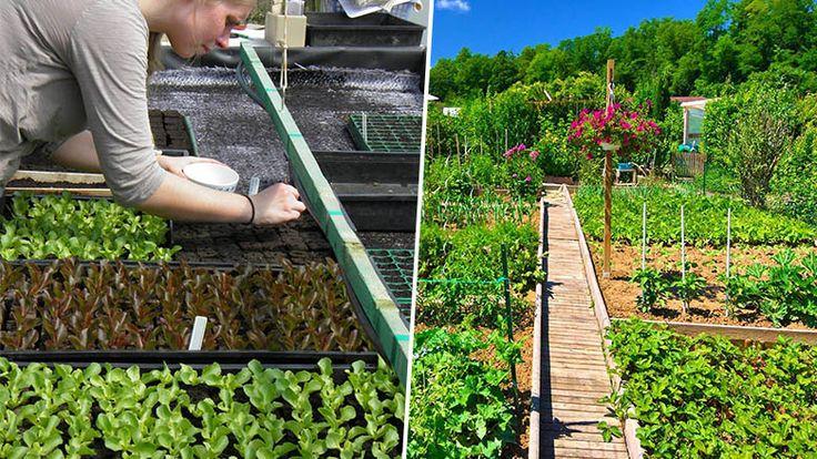 Une v ritable guerre des graines semble s tre for Rendement permaculture