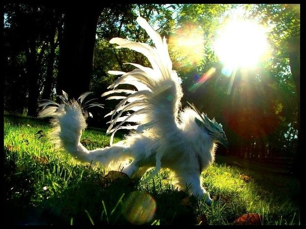 109 Best Animals Images On Pinterest: 109 Best Images About Myth Central On Pinterest