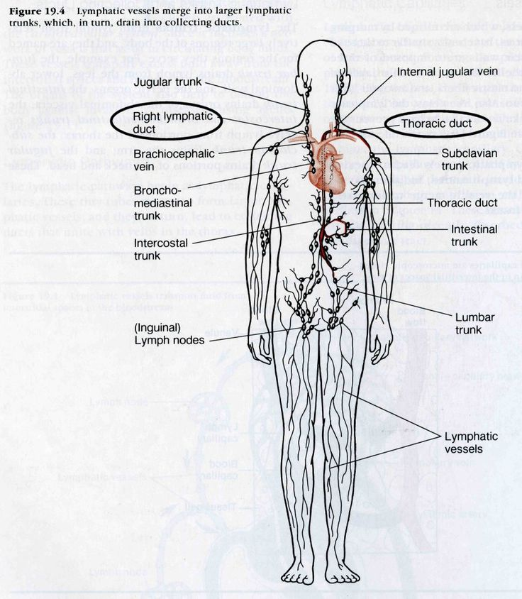20 Best Nursing School Lymphatic System Images On Pinterest
