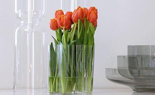 Orange tulips for the iitala vase