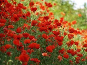 Attirer les insectes pollinisateurs au jardin, c'est facile, en privilégiant les plantes mellifères. Plantes fleuries, aromatiques, arbustes, fleurs sauvages... Un geste pour la biodiversité et les abeilles, un bon point pour le potager !
