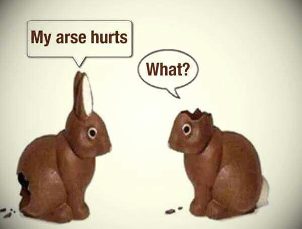 My arse hurts. What? Chocolate Bunnies | Cute Pics ...