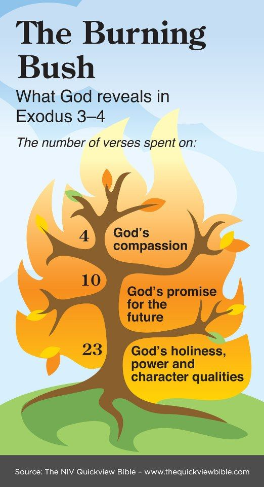 Exodus 3  4 Infographic: What God reveals in the burning bush. Read more here: www.BibleVersesAbout.org/bible/exod/