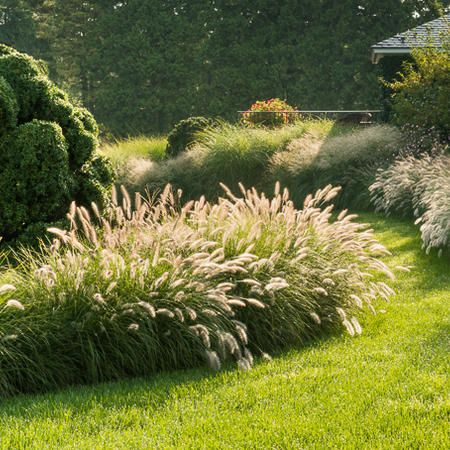 Guest House Grasses And Boxwood | providence landscapes