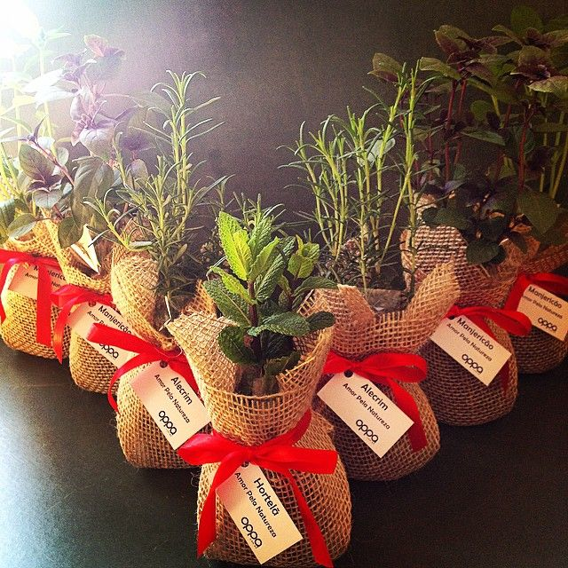 E o dia começa ensolarado e perfumado hoje! Ervas e temperos serão distribuídos na inauguração da loja Oppa de Moema hoje! É muito amor pela natureza!!! #bomdia #lepetitvert #lembrancinhaecologica #ervasetemperos #manjericão #hortelã #alecrim #muitoamor