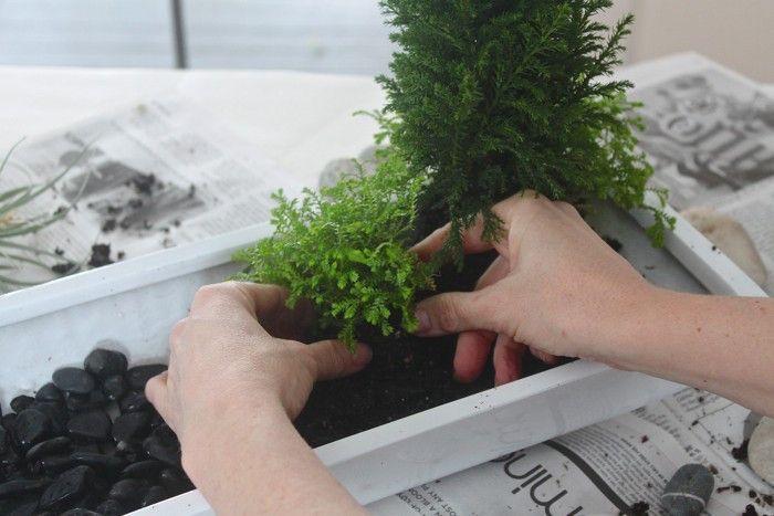 Jardin Japonais Miniature Un Concentre Du Monde Desktop Zen