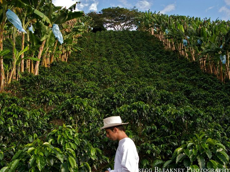 Coffee farm in Colombia- Colombian coffee has always been a favorite...smooth and sweet yet bold enough to wake all senses.