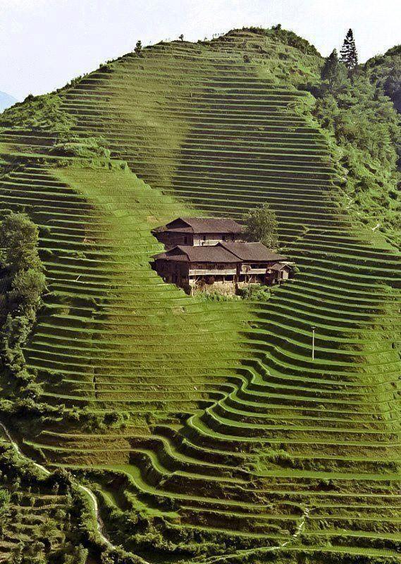 Terrasse Longji - Chine © Photo sous Copyright