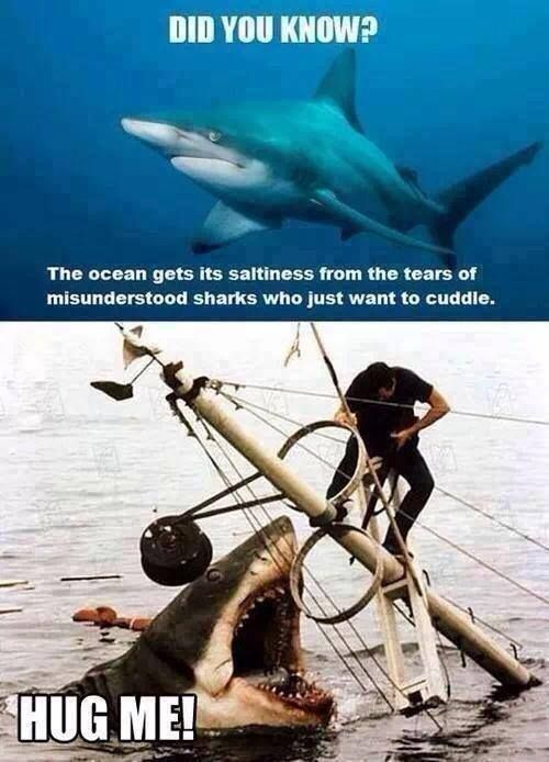 The Ocean Gets Its Saltiness From The Tears Of Misunderstood Sharks Who  Just Want To Cuddle. HUG ME!