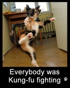 Cats Quotes 884 quotes