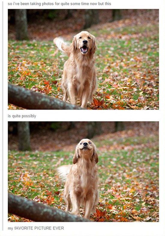 Best Smiling Dogs Ideas On Pinterest Cute Funny Dogs Funny - 21 hilarious dog moments