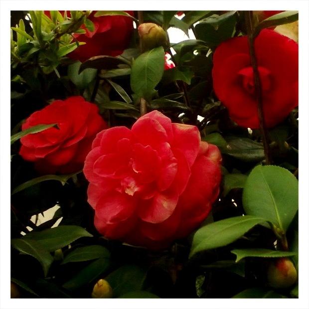 I fiori che non colsi - 8 aprile 2013 by MariannaLesLumieres, via Flickr