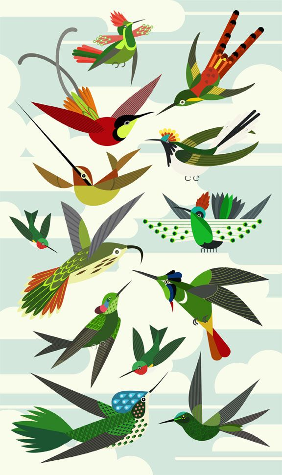 Scott Partridge - illustration - hummingbirds
