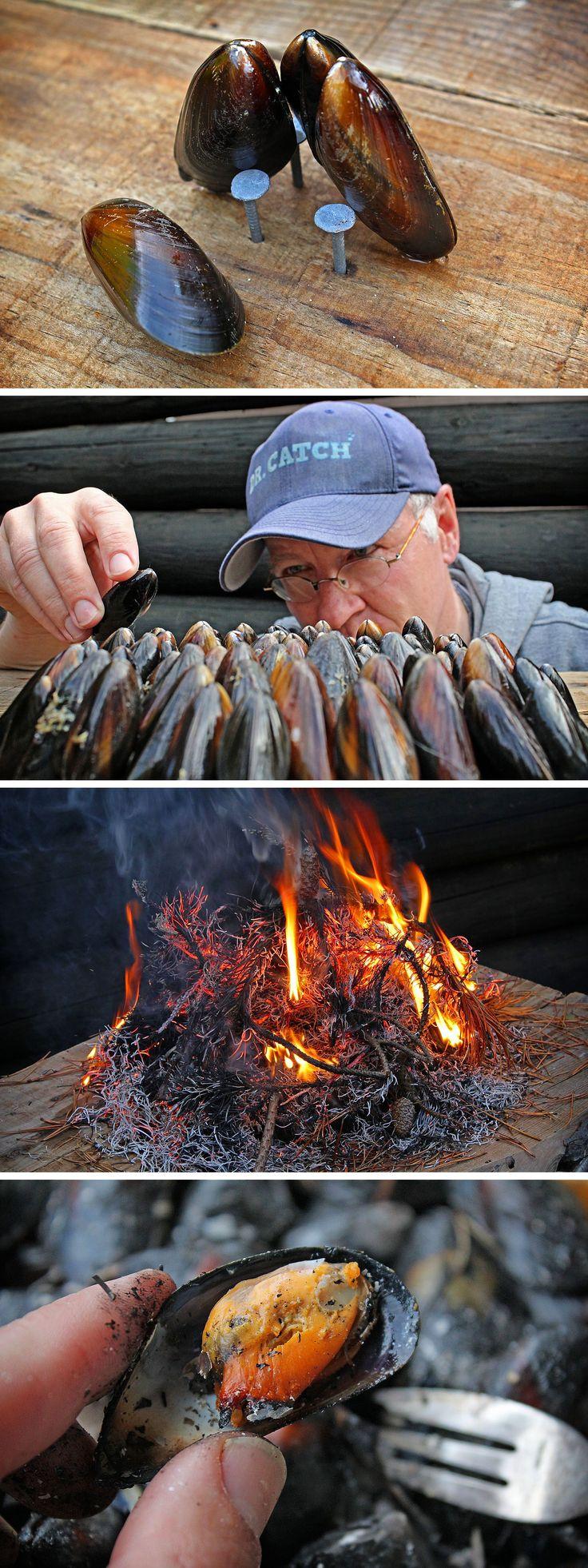 Eclade de moules - Muscheln auf Kiefernadeln zubereiten   Cooking mussels on pine needles