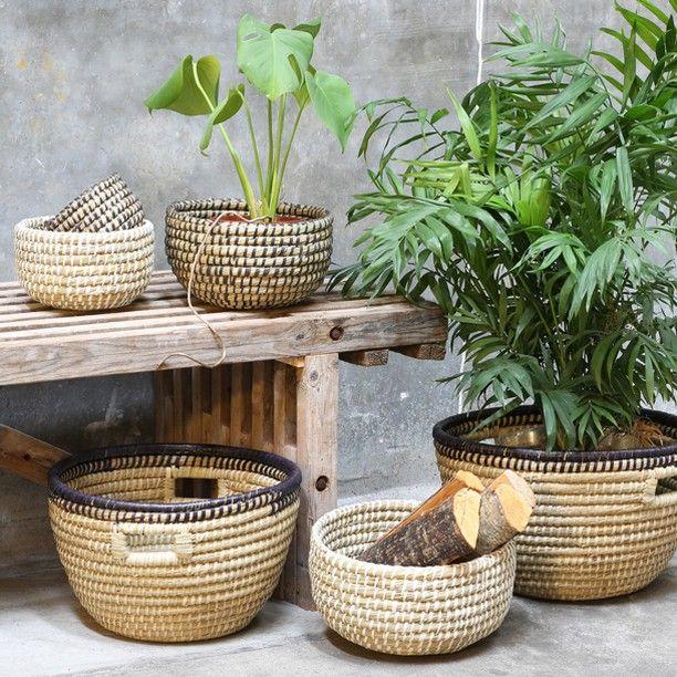 Skal helt sikkert have sådan nogle til stuen - nye planter