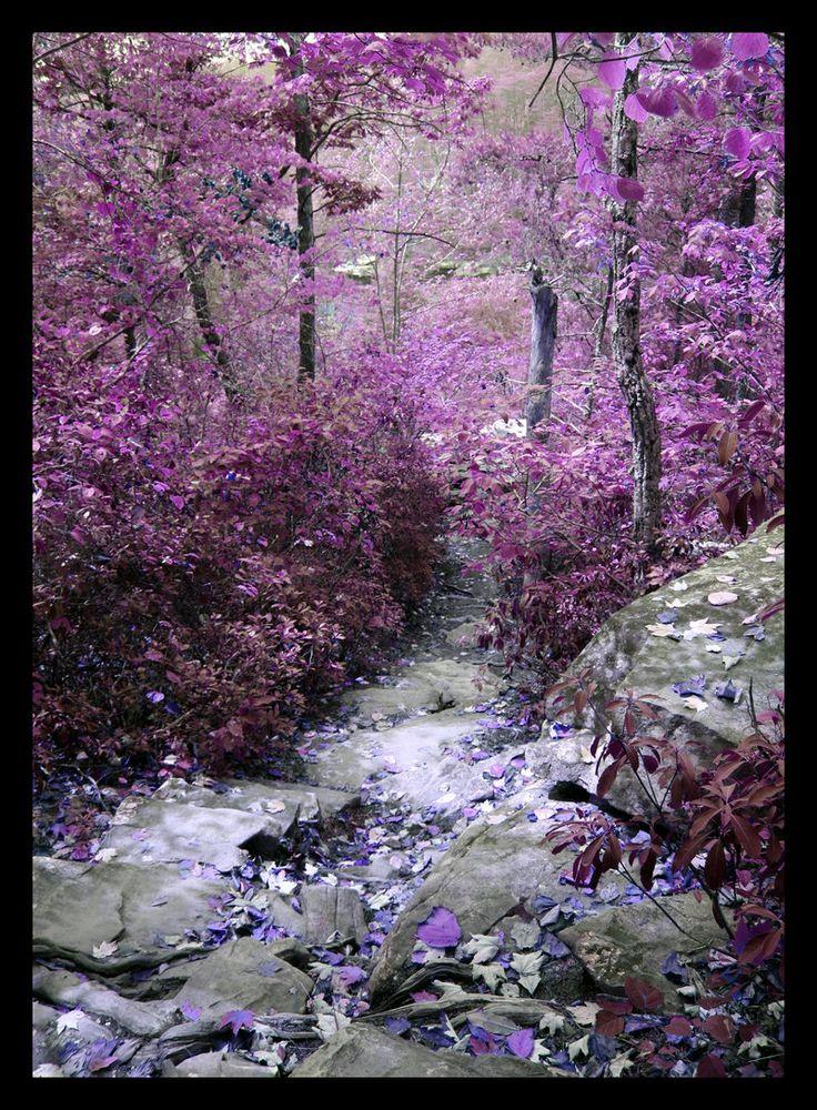 """Purple Descent"""
