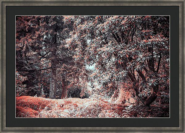 Jenny Rainbow Fine Art Photography Framed Print featuring the photograph Rhododendron In Benmore Botanic Garden. Nature In Aline Skin by Jenny Rainbow