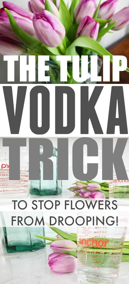 Clever trick to keep tulips from drooping using vodka!