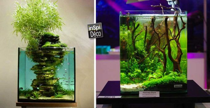 best 25 petit aquarium ideas on pinterest aquarium. Black Bedroom Furniture Sets. Home Design Ideas