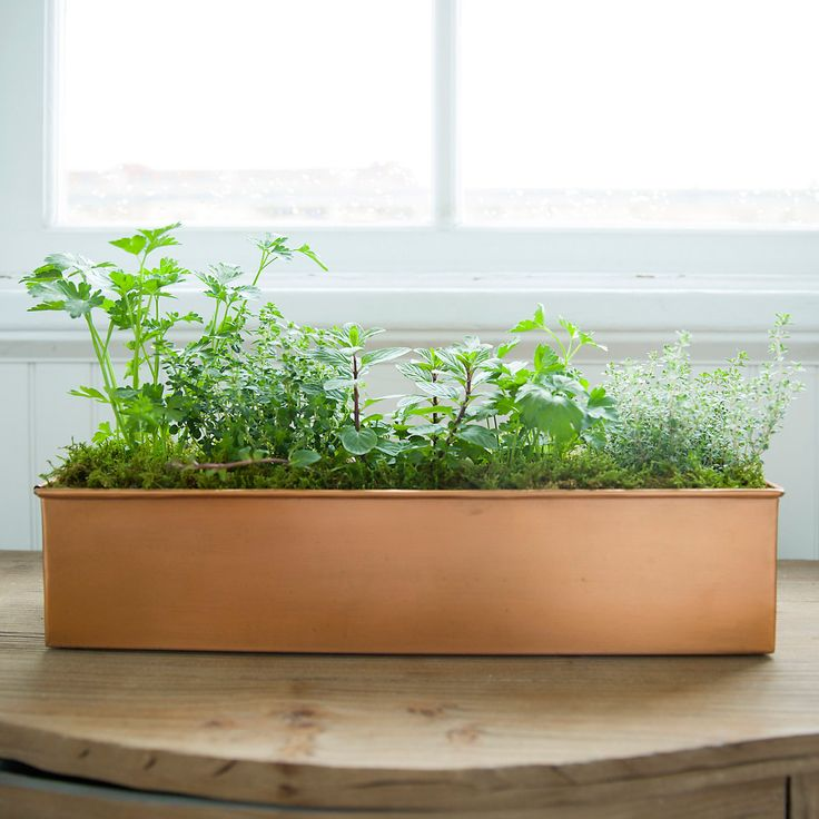 Food52 Herb Garden in for mom Mother's Day Gardener Gifts at Terrain