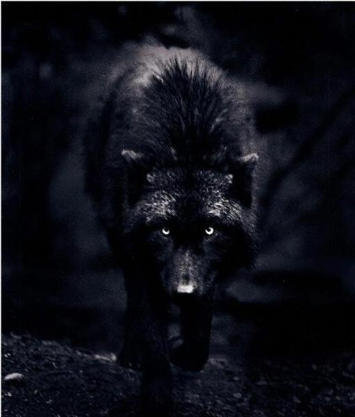 Si le loup y était...                                                                                                                                                                                 More