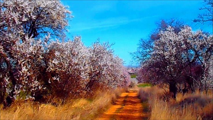 Floreciente Primavera,Monte El Viejo,Palencia