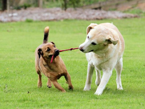 Dogs Playing with Toys   Dogs Playing Nicely #toys #dogtoys #animals