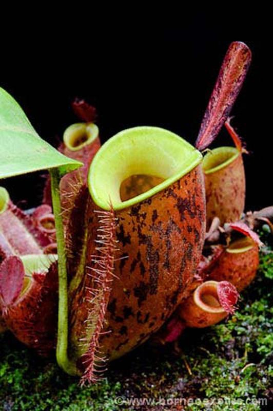 plante carnivore reve