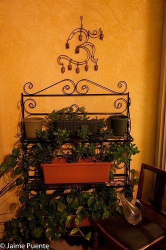 """""""Om"""" Plants (cc: @profragsdale)"""