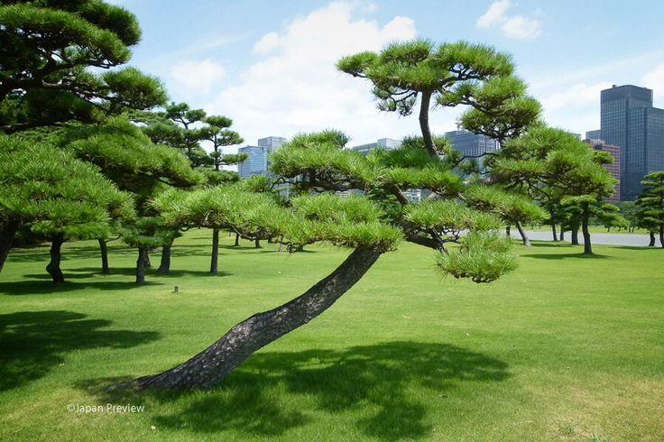 皇居外苑、千代田区、東京 Kokyogaien National Garden, Chiyoda-ward, Tokyo